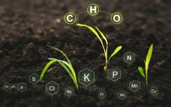 Soil with digital mineral nutrients icon. Role of nutrients in plant life for development.