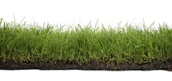 Soil with lush green grass on white background