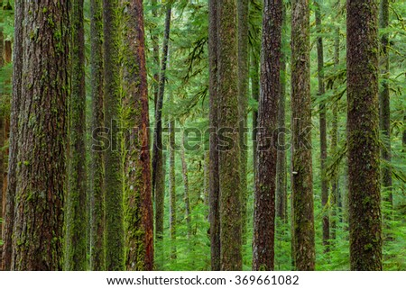 Sol Duc rainforest at Olympic National Park, Oregon Coast