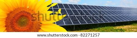 Solar energy panels and sunflower.