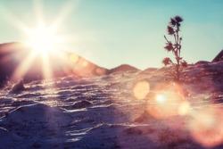 Solar flare on snowy slopes