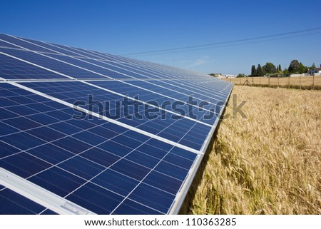 Solar Panels in a gold field