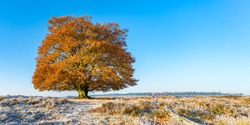 Solitairy tree with autumn colours in a crisp frosty white open landscape