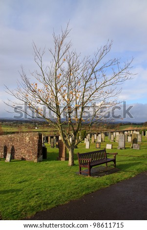 Solitary bench and barren tree in graveyard