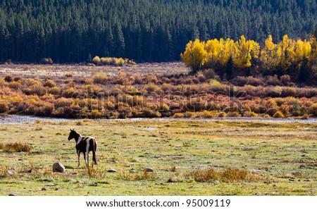 Solitary Horse Grazes in Colorado Rocky Mountain Valley