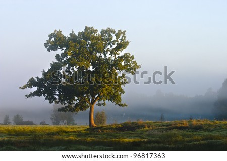 Solitary tree in a moor in the morning
