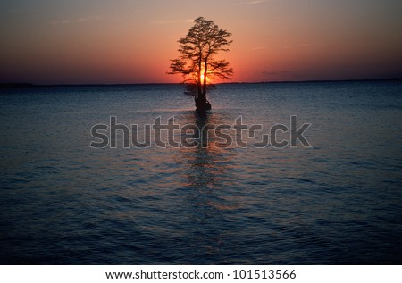 Solitary tree in the James River at sunset, Jamestown, Virginia