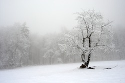 Solitary tree in winter, snowy landscape with snow and fog, foggy forest in the background.