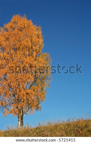 Solitary tree on a hill during fall - stock photo