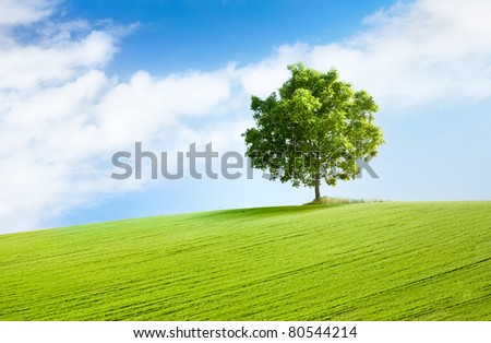 solitary tree on grassy hill and blue sky with clouds in the background