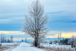 solitary tree with hoarfrost on a frigid winter morning with colorful sky on a country road