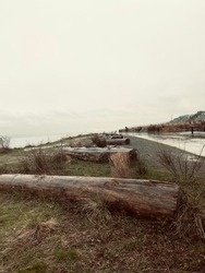 Somber line of logs. Cold and Grey.
