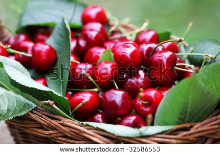 Some beautiful sweet cherry fruit in basket
