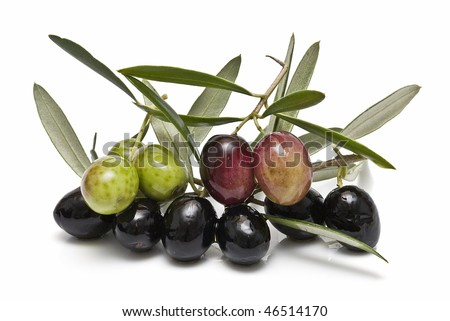 Some branches with olives and leaves.