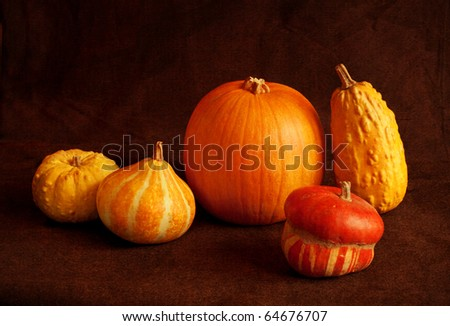Some colorful pumpkins of different colors and forms - stock photo