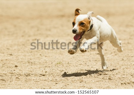 Some dogs likes to run free - stock photo