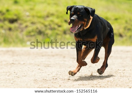 SOME DOGS LIKES TO RUN FREE, THIS IS A SUPER EDUCATED DOG THAT WON THE RIGHT TO BE OFF LEASH