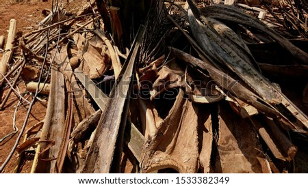 Some dried coconut stem fronds on the ground #1533382349