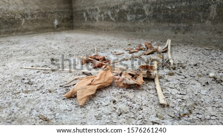 Some dried leaves on the surface of a dry pond or dry dam