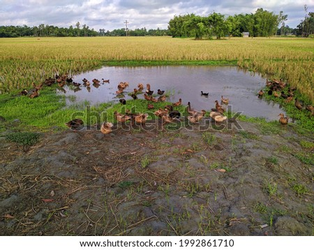 Some ducks on the banks of a small pond.
