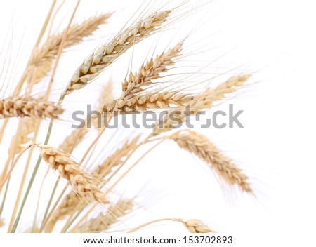 Some ears of wheat