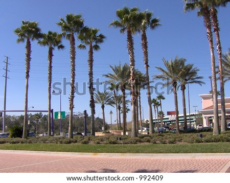 Some Florida tall palm trees.