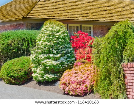 Some flowers and nicely trimmed bushes on the  front yard. Landscape design.