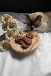 Some Fresh baked chip cookies on the round board and on the background, a cute cat tries to smell the cookies, the zinnia flowers just for the property. On the white sheet