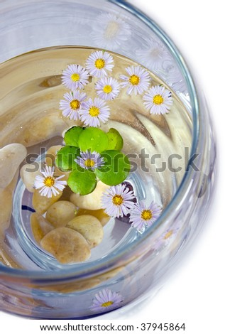 some herbal flowers and glass of water