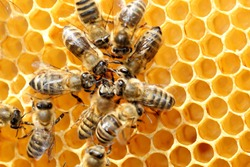 some honey bees in circle on a bee hive