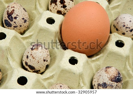 Some little quail egg with a large chicken egg