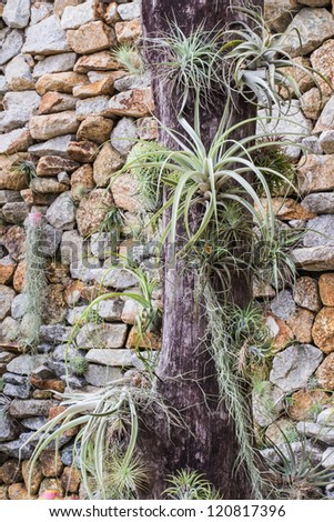 Some plants on dead tree with stone wall background