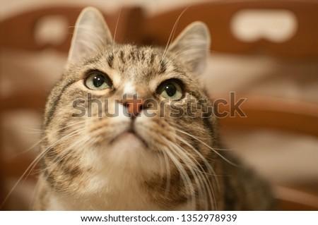 Some pretty striped cat  #1352978939