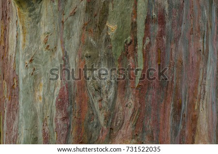 Shutterstock Some trees had smooth and rainbow color bark with knots all over / Abstract of Nature / It's like freak of nature with different color strains on its barkless like tree trunk