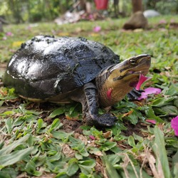 some turtles love flowers! Roses, pansies, petunias, lilies, carnations, hibiscus, hyssop, borage, nasturtium and geraniums are all okay as turtle food.