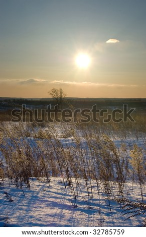 Some various kinds of grasses in back lighting of sunset