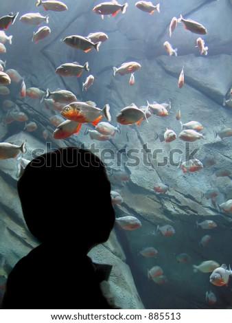 Someone looking at fish