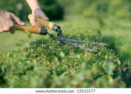 someone trimming bushes with  garden scissors