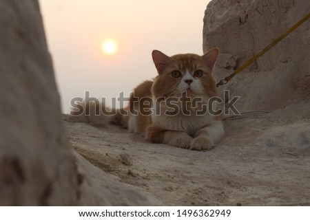 sometimes he likes to feel like a cute tiger waiting for the sunset #1496362949