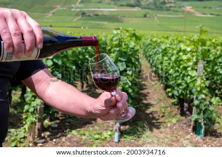 Sommelier or waiter pouring of burgundy red wine from grand cru pinot noir vineyards, glass of wine and view on green vineyards in Burgundy Cote de Nuits wine region, France in summer Stockfoto ©