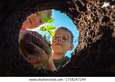 Son and mother planting plant together in pit in garden. View from hole from bottom up. Gardening and growing trees and sprouts in soil. Farmer child transplant strawberry bush in dug bed in ground