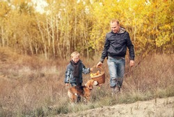 Son with father carry full basket of mushrooms in autumn forest