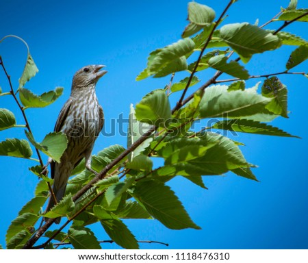 Songbird on a branch