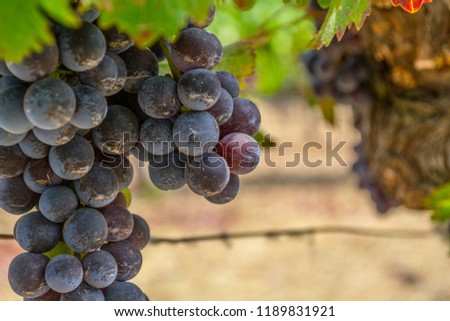 Sonoma valley is world renowned for its wineries #1189831921