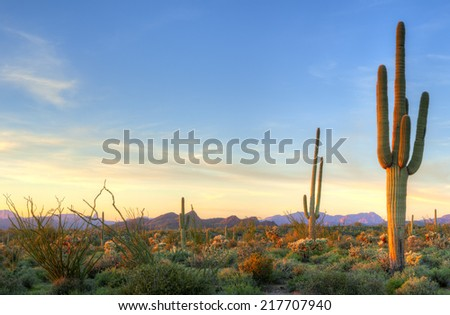 Sonoran Desert catching days last rays. #217707940