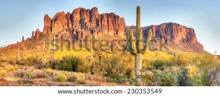 Sonoran Desert, Saguaros and Brittlebush catching day's last rays. #230353549