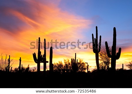 Sonoran Desert sunset.