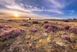 Soothing landscape scenery of heathland in National park Hoge Veluwe, Gelderland Province, the Netherlands. Landscape scene of nature in Europe.
