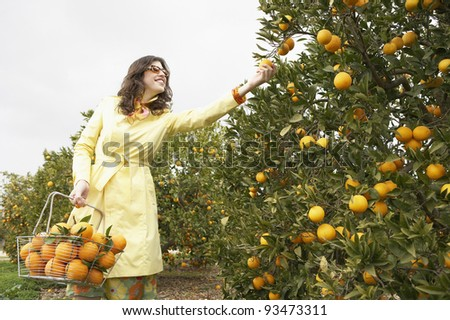 Sophisticated woman reaching for an orange from a tree while holding a supermarket shopping basket full of oranges.