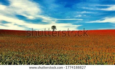 sorghum field blue sky and tree landscape Zdjęcia stock ©